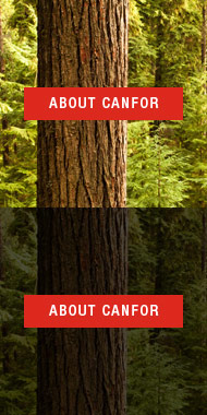 About Canfor